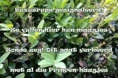 104 34 50 Buxusrups 01-06-2017 (Medium)