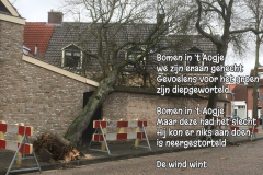 176 26 52 Wind in 't Aogje 14-03-2019 (Medium)