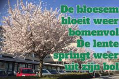097 27 50 Bloesem 30-04-2017 (Medium)